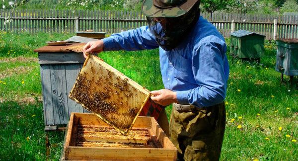 сайт пчеловода