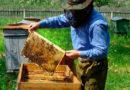 Семь основных заповедей пчеловода