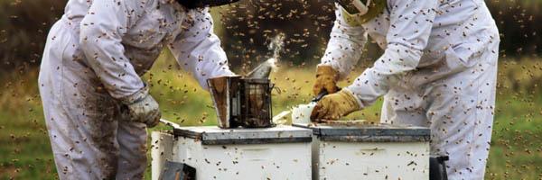 компания пчеловодов